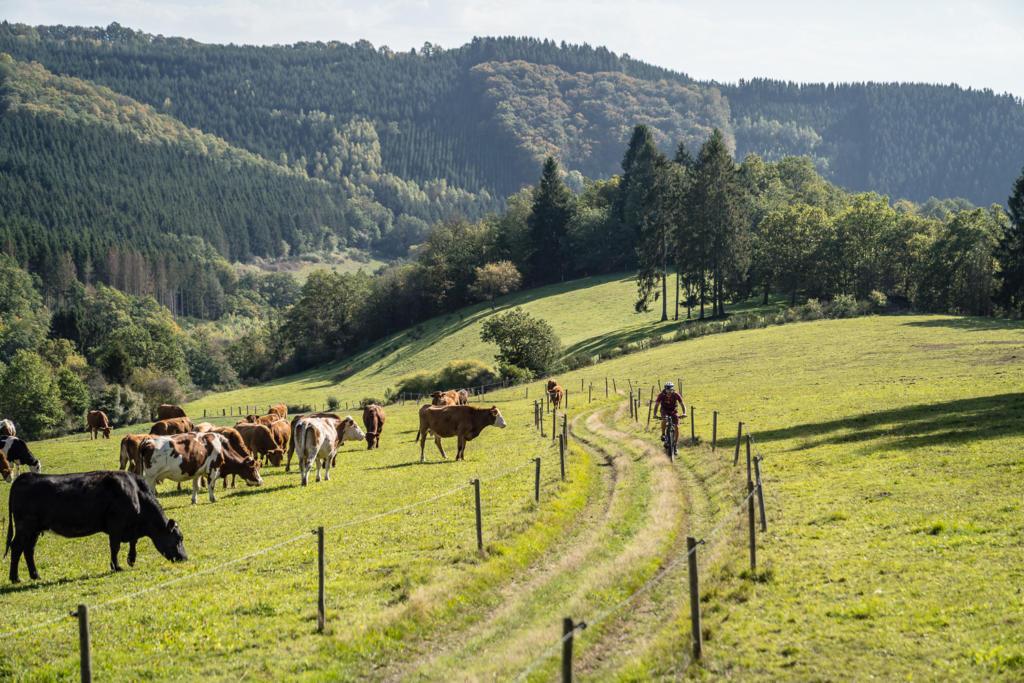 Belgische Ardennen Mountaibike Strecke