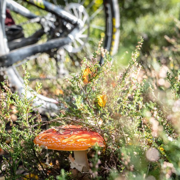Ardennen Mountainbike Trails Landschaft
